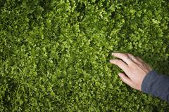 A woman's hand stroking the lush green foliage of a growing plant. small deli Stock Photos