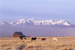 A small group of horses grazing in the heber valley. a snowcapped mountain ra Stock Photos