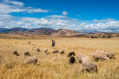 woman shepherd peruvian andes  cuzco peru - stock photo