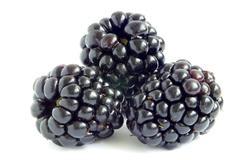 blackberry - stock photo