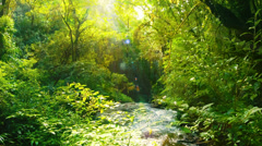 Creek in the rainforest Stock Footage