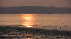 Poole harbour with sunset reflecting on water - stock footage