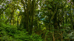 Forest in the highlands of thailand Stock Footage