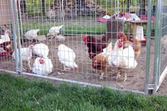 Chicken coop Stock Photos