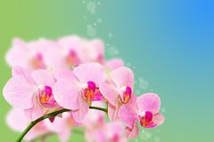 Spotted pastel orchid flowers on gradient blurred summer background Stock Photos