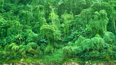 Tropical vegetation. panorama of jungle in laos Stock Footage
