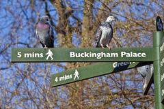 Pigeons on Pedestrian Signposts in London Stock Photos
