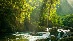 Creek flowing between rocks in the rainforest Stock Footage
