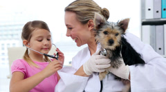Little girl watching vet checking her yorkshire terrier Stock Footage