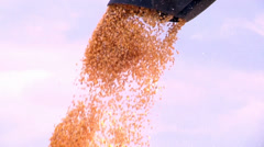 Harvesting and load a Cornfield in SC, Brazil. Stock Footage