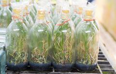 orchid seedlings in a bottle with a mineral medium - stock photo