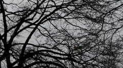 Leafless trees silhouetted and blowing in the wind against a gray stormy sky 1 Stock Footage