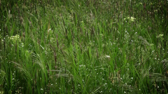 Background. prairie grass and wind Stock Footage