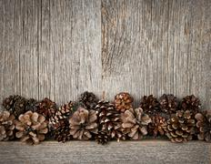Wood background with pine cones Stock Photos