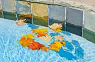 Stock Photo of fall leaves floating in pool