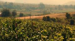 Wine grapes vineyard estates at warm sunset of rural Burma, Myanmar landscape Stock Footage