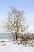 Winter tree on shore Stock Photos