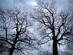 leafless trees against evening sky - stock photo