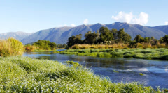 New zealand spring creek Stock Footage