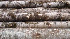Aspen logs, background clip Stock Footage