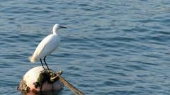 White Crane Stork bird at Cheung Chau island shelter Hong Kong China Asia Stock Footage