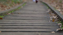 Woman running on woden trail Stock Footage