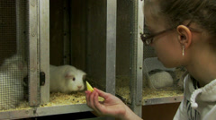 Petting zoo Stock Footage