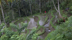 Man working in rice terraces Stock Footage