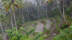 Rice terraces and coconut palms during rainy season downpour - stock footage