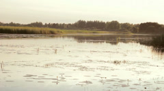 Sunny Countryside Evening by the River Stock Footage