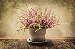 detail of nice heather flower in pot, vintage style - stock photo