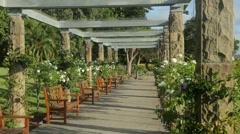 Roses, pergola, sydney botanical gardens, australia Stock Footage