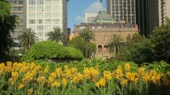 Yellow iris, sydney botanical gardens, australia Stock Footage