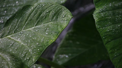 Green leaves in clean environment Stock Footage