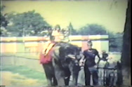 Stock Video Footage of kids on elephant ride, stops for field mouse, continues, 1969
