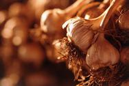 Stock Photo of amount of garlic bulbs