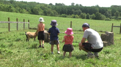Stock Video Footage of  goats at organic farm