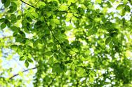 Stock Photo of green leaves on a sunny day as a backdrop.