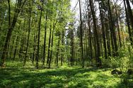 Stock Photo of spring green forest and blue sky. landscape.