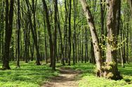 Stock Photo of spring green forest.