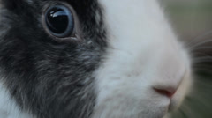 Rabbit looking in camera - stock footage