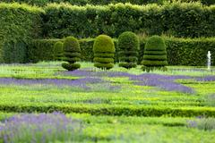 Gardens with the flourishing lavender at castles in the valley of loire Stock Photos