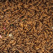 Worms in animal market Stock Photos