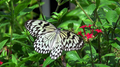 Paper Kite Butterfly Stock Footage