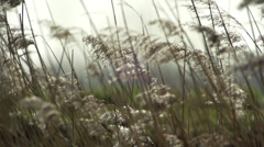 Plants at Lake Stock Footage