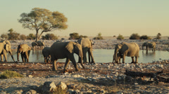 Many Elephants Drinking at Watering Hole Stock Footage