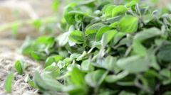 Portion of fresh oregano (loopable) Stock Footage