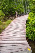 wooden bridge through the mangrove reforestation - stock photo
