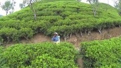 AERIAL: Cheerful woman picking tea leaves in Sri Lanka Stock Footage
