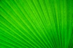 Abstract image of green palm leaves in nature Stock Photos